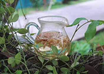 Lemongras-Tee aus Thailand