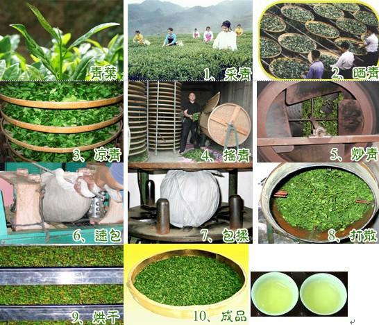 7-Schritte-Prozess Tie Guan Yin Herstellung, Anxi, Fujian, China